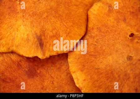 Detail of bright orange caps of Laughing Gym. - Stock Photo