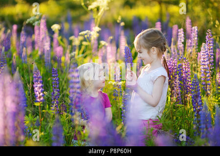 Two cute little sisters in blooming lupine field on summertime - Stock Photo