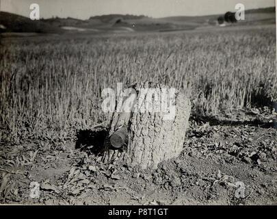 .   23 8cm Granate im Baumstamme (BildID 15529318) - Stock Photo