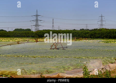 centre pivot boom crop irrigation system in use during drought in field with plastic mulches to retain moisture and suppress weeds york united kingdom - Stock Photo
