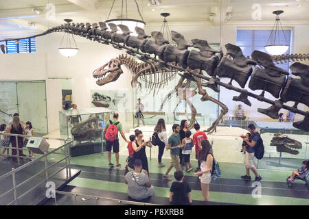 2 huge dinosaurs Apatosaurus tail in foreground overlooking diverse admirers all ages walking center aisle display & Tyrranosaurus rex skeleton beyond - Stock Photo
