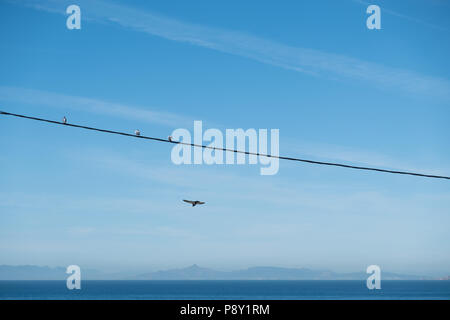 Birds sat on a power line over the Aegean sea with the Sardonic Islands in the background as another bird swoops below, East Attica, Greece, Europe. - Stock Photo