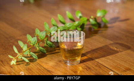 A buchu twig and a tot of traditional buchu brandy prepared by placing leaves and stalks into brandy - Stock Photo