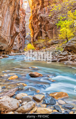 Virgin River Narrows in Zion National Park, Utah. - Stock Photo