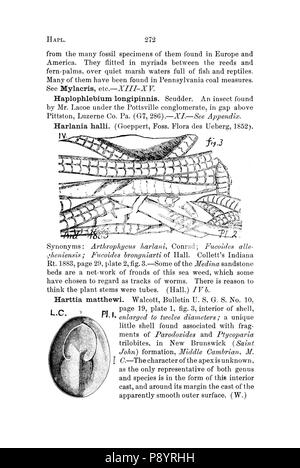 A dictionary of the fossils of Pennsylvania and neighboring states named in the reports and catalogues of the survey (Page 272) - Stock Photo
