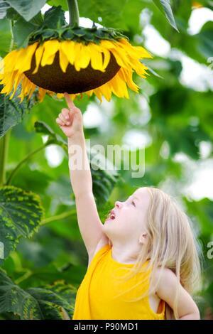 Cute little girl reaching to a sunflower in summer field - Stock Photo