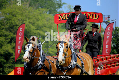 Guildford, England - May 28 2018: Dray or open wooden wagon belonging to Morland Brewery, being pulled by two bay Shire horses in traditional leather  - Stock Photo