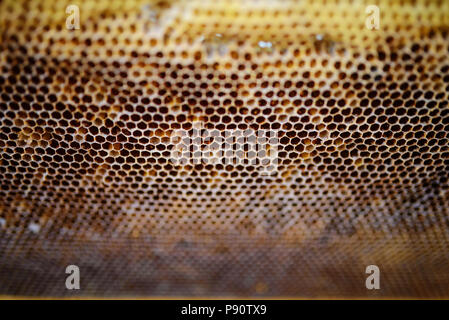 Background texture and pattern of a section of wax honeycomb from a bee hive filled with golden honey in a full frame view. - Stock Photo