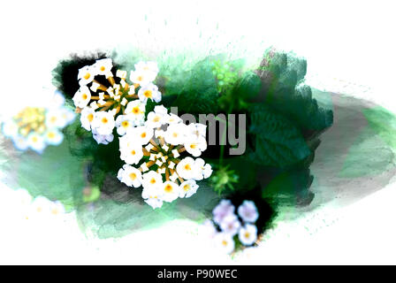 Abstract flower blooming on colorful watercolor painting background and Digital illustration brush to art. - Stock Photo
