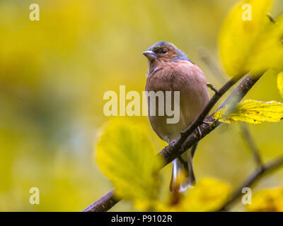 Wild birds - Stock Photo