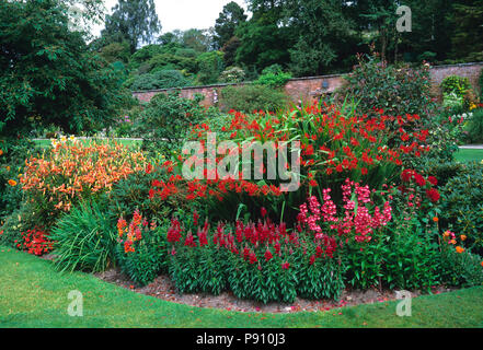 Red flower border with crocosmia, penstemon and antirrhinum in a country garden - Stock Photo
