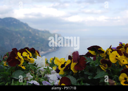 Colourful pansy flowers in flower beds of the gardens of Ravello, Amalfi Coast, Italy - Stock Photo