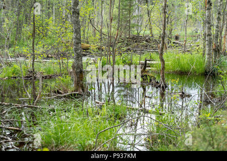 Swamp and forest detail in Hiidenportti National Park in Finland - Stock Photo