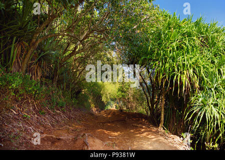 Beautiful Pololu loop trail located near Kapaau, Hawaii, that features beautiful wild flowers and stunning views to the Pololu Valley. Big Island, Haw