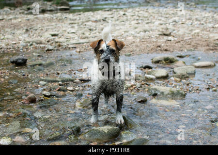 FUNNY MUDDY DIRTY DOG IN A NATURAL RIVER BACKGROUND - Stock Photo