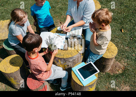 Young primary students exploring herbs through their senses in a garden. Top view of school children sitting around a table and learning about plants. - Stock Photo