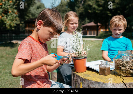 Kids learning together at a natural science class. Side view of a primary student exploring herbs and plants with his classmates in a school garden. - Stock Photo