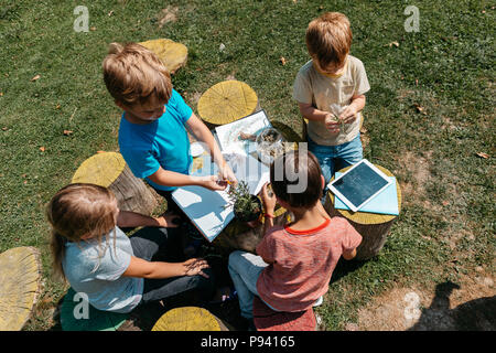 Group of classmates learning together at a natural science lesson outside in a garden. Top view of children cooperating on a school project. - Stock Photo
