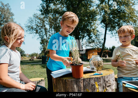 Homeschooling - children working on an environmental project outside in a park. Young students learning about plants and herbs together. - Stock Photo