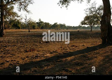 Mana Pool National Park. Zimbabwe - Stock Photo