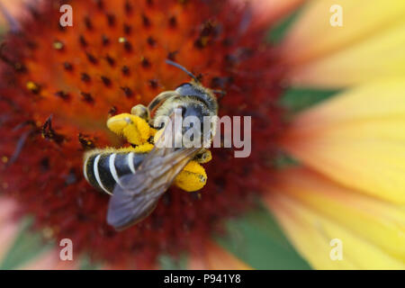 Close-up of bumblebee sitting on the nice flower - Stock Photo