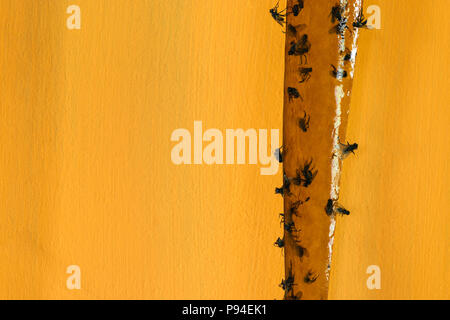A lot of flies caught on sticky fly catcher in yellow background surface - Stock Photo