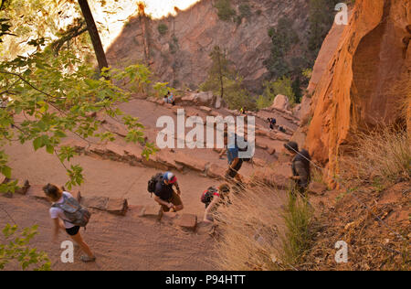 UT00453-00...UTAH - Hikers on Walter's Wiggles, a series of switchbacks up a cliff below Scouts Lookout on the West Rim and Angels Landing trails in Z - Stock Photo