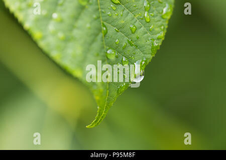 Water drops from rain on a green leaf - Stock Photo