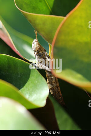 dragonfly nymph casing - Stock Photo