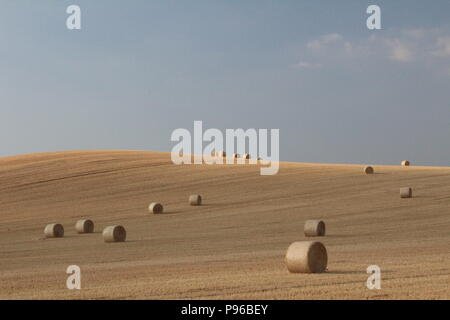 Straw round bales of hay in field with blue sky and clouds in English landscape - Stock Photo