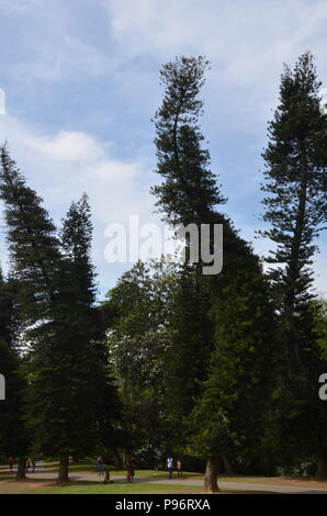 Bandy trees in national park, Sri Lanka