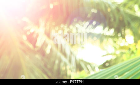 abstract background, green palm leaf on tropical beach with sun light, - Stock Photo