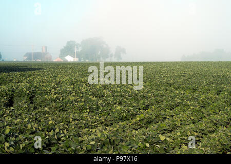 A distant farm emerges for an early morning summer fog in northern Illinois near Richmond, Illinois, USA. - Stock Photo
