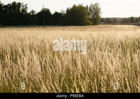 Stockholm, Sweden - 15 July 2018. The heat wave over Sweden and Stockholm continues with around 30 degrees celsius all day and night. Credit: Jari Juntunen/Alamy Live News - Stock Photo