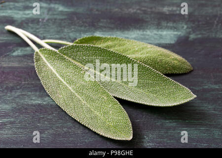 Fresh leaves of medicinal plants of sage Stock Photo
