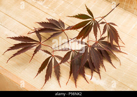 Single twig of fresh brown Japanese maple leaves on a wooden background - Stock Photo