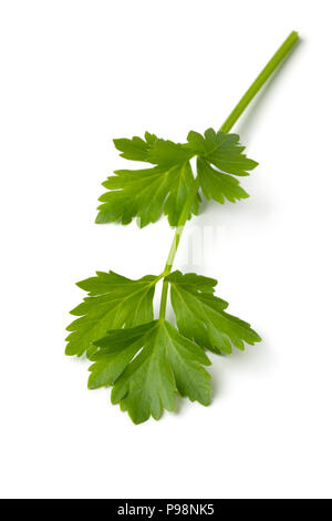 Single twig of fresh green lovage isolated on white background - Stock Photo