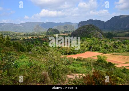 Vinales valley in cuba, botany, agriculture, blue sky, sunny, hilly landscape, tobacco, farm houses, palm trees, fields, clouds, nobody, horizon - Stock Photo
