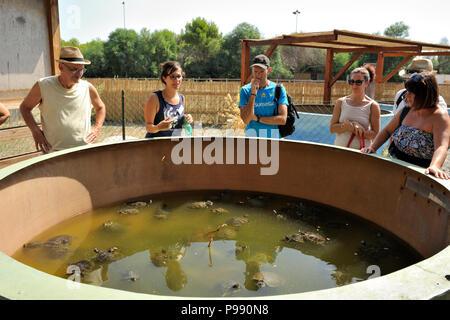 italy, basilicata, policoro, riserva regionale bosco pantano, wwf natural reserve, Centro Recupero Tartarughe Marine (marine turtles recovery centre), - Stock Photo