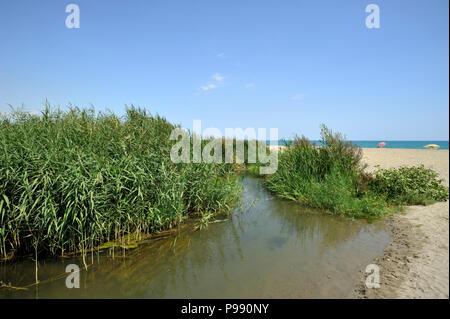 italy, basilicata, policoro, riserva regionale bosco pantano, wwf natural reserve - Stock Photo