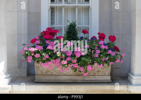 Small gardens: window box with summer flowers and plants in Mayfair, London - Stock Photo