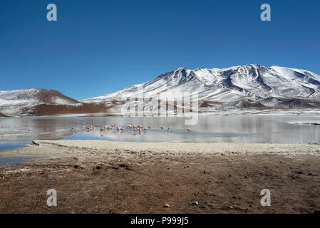 The wintery landscape of Laguna Cañapa (Cañapa salt lake) in the Potosí Department, Bolivia. - Stock Photo