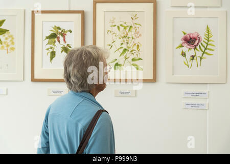 Woman at exhibition, looking closely at display of realistic beautiful botanical art paintings - RHS Chatsworth Flower Show, Derbyshire, England, UK. - Stock Photo