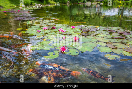 group of ornamental karpa koi fishes and water lilies in the park. Water Lilies. (Nymphaeaceae) - Stock Photo