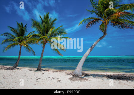 Tropical coconut palm trees, blue skies and white sand beach paradise on Little Cayman Island, Cayman Islands, Caribbean Sea - Stock Photo
