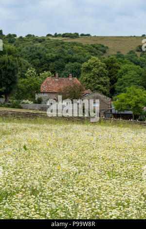 typically english country farmhouse cottage in summer, isle of wight, england, uk - Stock Photo