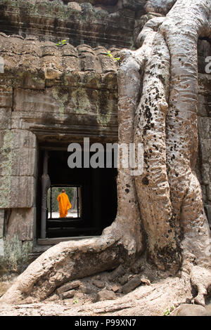 Giant tree roots and monk in temple Ta Prom Angkor wat - Stock Photo
