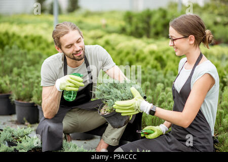 Young couple of workers in uniform taking care of plants at the greenhouse of the plant shop - Stock Photo