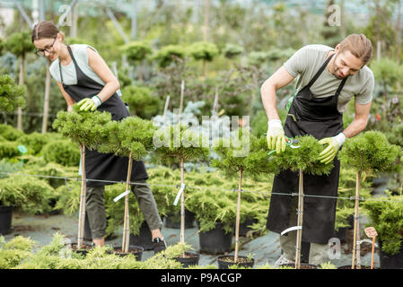 Couple of the workers taking care of decorative trees for sale in the shop of the greenhouse - Stock Photo