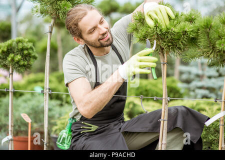 Man in uniform pruning ornamental trees working in the greenhouse - Stock Photo